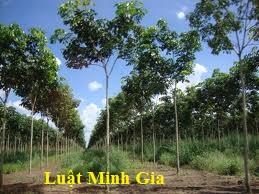 Nghĩa vụ bồi thường thiệt hại do vi phạm hợp đồng thuê đất