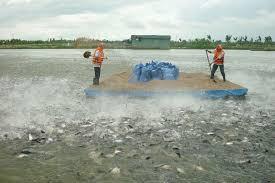 Thu hồi đất, các vật nuôi là thủy sản giải quyết bồi thường như thế nào?