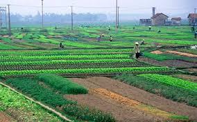 Đất công ích của xã có được cấp giấy chứng nhận quyền sử dụng đất không?