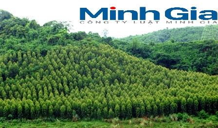 Đất rừng sản xuất? Đất rừng có được canh tác nông nghiệp?